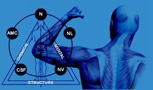 Applied Kinesiology   Chiropractor Leland - Wilmington NC   ChiroCynergy